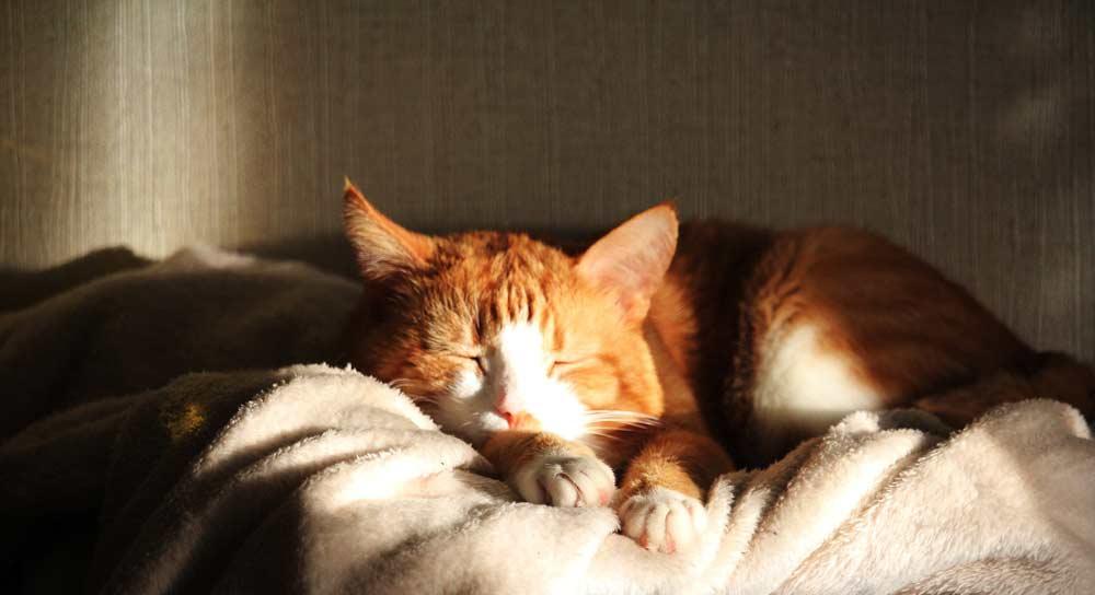 Картинки по запросу кот лежит на солнце